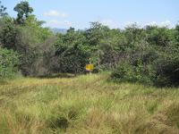 ที่ดินเปล่าหลุดจำนอง ธ.ธนาคารกรุงศรีอยุธยา จังหวัดกาญจนบุรี เมืองกาญจนบุรี ลาดหญ้า